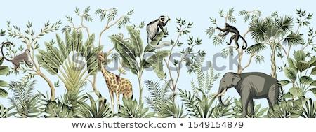 Giraffe natuur grens illustratie blad achtergrond Stockfoto © bluering