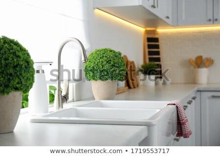 Cserepes növény mosogató modern mosdókagyló vízcsap konyha Stock fotó © AndreyPopov