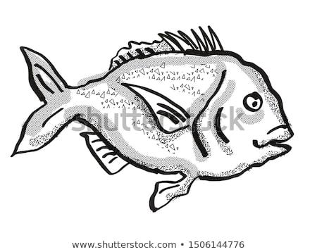 Snapper New Zealand Fish Cartoon Retro Drawing Stock photo © patrimonio