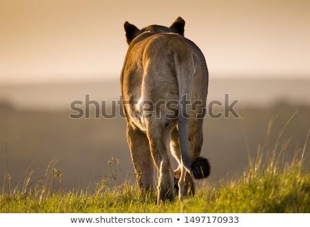 Kijken uit buit spel reserve South Africa Stockfoto © simoneeman