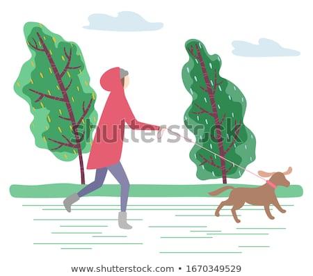 Bos slechte weer park regenval groene Stockfoto © robuart