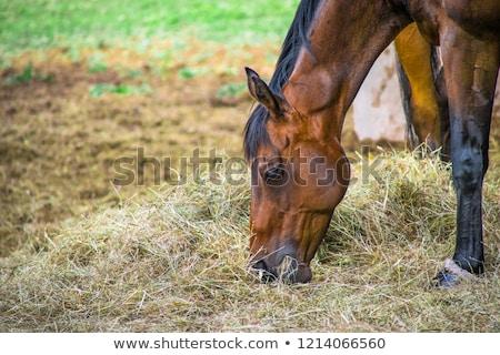 részlet · fej · ló · száj - stock fotó © vividrange
