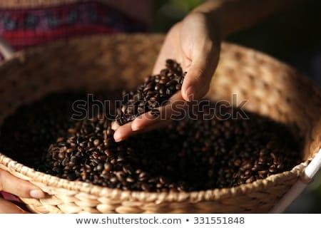 少女 コーヒー豆 コーヒー 手 ヌード 手 ストックフォト © zastavkin