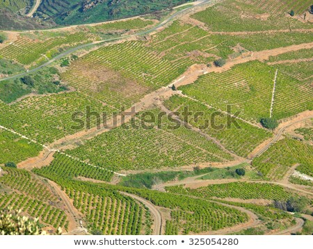 grapevines in vineyard, Languedoc-Roussillon, France Stock photo © phbcz