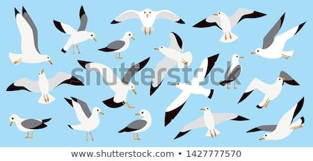 Zeemeeuw vliegen natuur vogels vrijheid vrede Stockfoto © taden