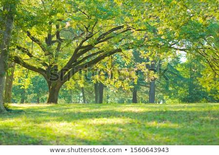 Lata krajobraz drzew łące niebo gospodarstwa Zdjęcia stock © taden