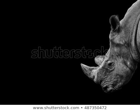 Black Southern Asia Stock photo © Volina
