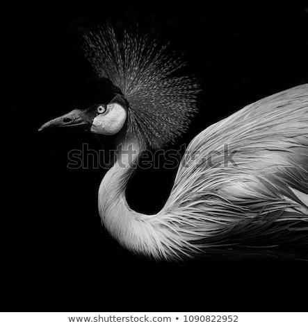 黒白 レギンス 孤立した 少女 ファッション ボディ ストックフォト © Elnur