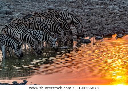 safari · park · Namibya · gün · batımı · doğa · manzara - stok fotoğraf © imagex