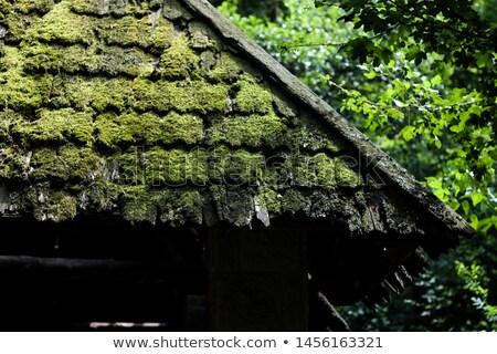 abadoned shack Stock photo © Kayco
