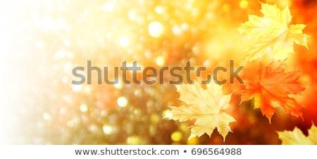Beyaz huş ağacı yaprakları Hint yaz parıltı Stok fotoğraf © stevanovicigor