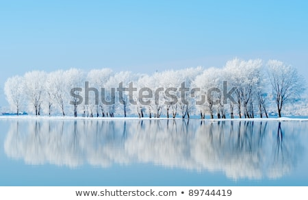 Winter landscape with lake and trees covered with frost Stock photo © AlisLuch