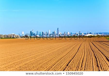 Skyline Frankfurt stad natuur veld Stockfoto © meinzahn