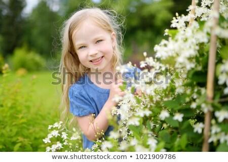 little · girl · girassóis · pequeno · vermelho · menina - foto stock © adrenalina