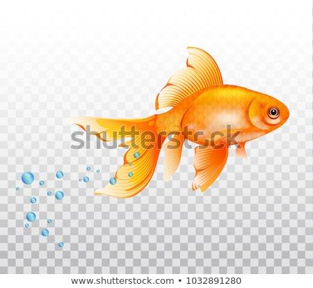 Sevimli akvaryum balığı yüzme şeffaf örnek gülümseme Stok fotoğraf © bluering