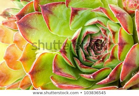 Blätter grünen Anlage natürlichen abstrakten Stock foto © OleksandrO