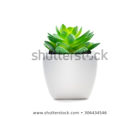Close up of potted green plant Stock photo © IS2