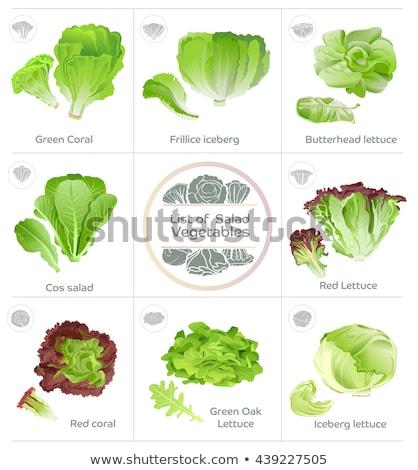 Head of fresh organic lettuce salad Stock photo © Melnyk