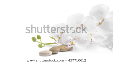 pink orchid and zen stones on a white background stock photo © g215