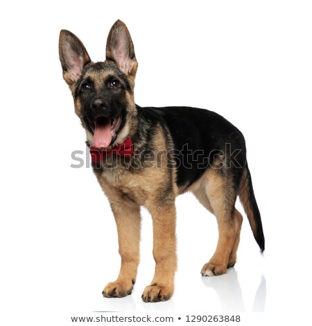 Zarif kurt köpek pantolon yan Stok fotoğraf © feedough