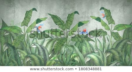 Papegaai boom illustratie hout bos natuur Stockfoto © colematt