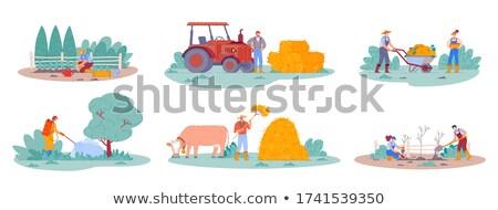Szett gazdálkodás jelenet illusztráció ház fű Stock fotó © colematt