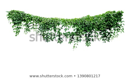 Arch of plants and flowers isolated on white Stock photo © galitskaya