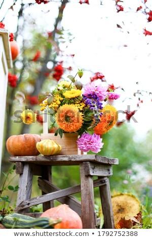Rosso vaso isolato bianco fiore vetro Foto d'archivio © ivonnewierink