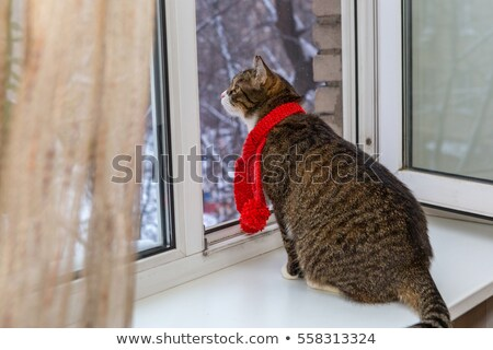 Red cat in a scarf sitting on the windowsill in winter Stock photo © raduga21