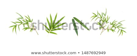 Bamboe bladeren witte boom voorjaar gras Stockfoto © szefei