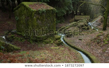 Detail of a small water mill Stock photo © Arrxxx