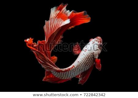 eau · vague · baleine · poissons · queue · logo - photo stock © cidepix