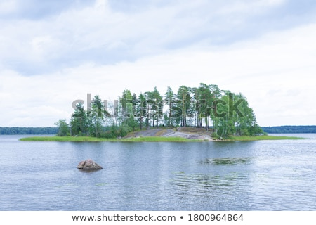 樺 木材 花崗岩 石 木製 古い ストックフォト © vavlt