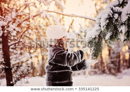 氷 松 雨 冬 ストックフォト © icemanj