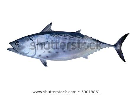piccolo · tonno · pesce · frutti · di · mare · sport - foto d'archivio © lunamarina