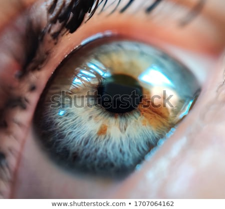 Brown Iris Stock photo © ArenaCreative