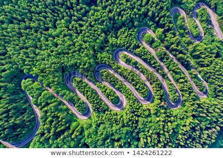 сельский пути лес лет после полудня свет Сток-фото © ambientideas