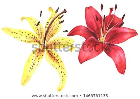 pink yellow red Flower Stock photo © stocker