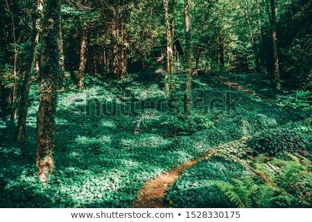 Trees in a garden, Tobermory, Ontario, Canada Stock photo © bmonteny