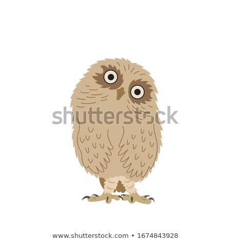 Owl in the zoo Stock photo © Nneirda