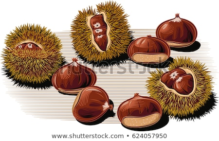 Chestnuts in the urchin Stock photo © adrenalina