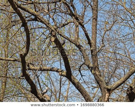 Iki genç ağaçlar birlikte kahverengi doku Stok fotoğraf © slunicko