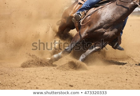 Horse at the rodeo Stock photo © adrenalina