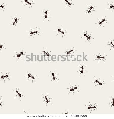 insetos · rabisco · conjunto · borboleta · vermelho - foto stock © netkov1