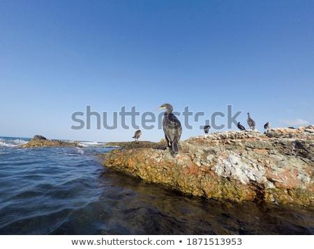 Denia Las Rotas beach in Mediterranean Spain Stock photo © lunamarina