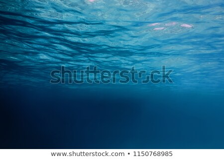 Underwater view Stock photo © bluering