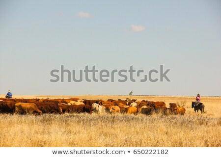 Horses in droves. Stock photo © asturianu