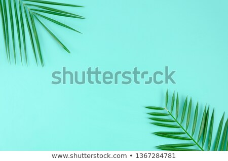 Summer Background with Palm Leaves in the Corner, Stock photo © robuart