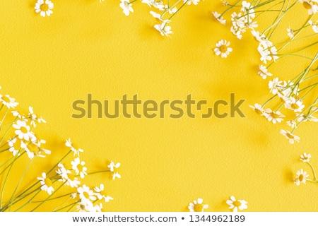 Stock photo: Spring holiday composition in yellow colors