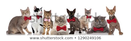 Equipe oito bonitinho gatos branco Foto stock © feedough